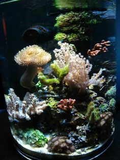 Nice pico, more pics here:  http://www.3reef.com/forums/show-off-your-fish-tanks/my-pico-two-years-old-now-143287.html