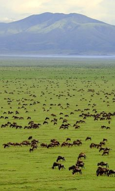 Grassland: Plaines and Praires  Warm summers and cold winters  Extremely rich soil with shrubby and thick grasses Herbivores
