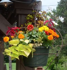 See how nice the red coleus makes the pot? And the potato vine really sets the mood and adds lightness