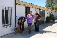 Refuge de Carmona/ Nouveau partenaire de Lévriers sans Frontières/ 25 galgos en sortiront bientôt - Galgos martyrs/ Lévriers sans frontières