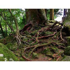 【aikomanabe】さんのInstagramをピンしています。 《🌳👐🏼🌳 ------------------------------------------ #熊野古道#那智の滝#新宮市#勝浦#世界遺産#自然#森#こけ#苔#緑#根っこ#マイナスイオン#天然#日光#夏#TAXI#Roots#kumanokodo#mountain#⛰#Nature#good#📷#green#goodday#forest#moss#worldheritage#photo#Picture》