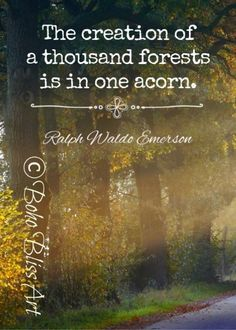 Tree Quotes, Wall Art Quotes, Quote Wall, Emerson Quotes, Irish Proverbs, Ralph Waldo Emerson, Personalized Wall Art, Empowering Quotes