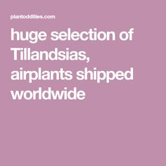 huge selection of Tillandsias, airplants shipped worldwide Air Plants, Indoor Plants, The Selection, Reading, Green, Mauve, Inside Plants, Reading Books