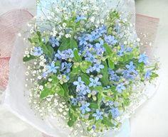 ブルースター/ カスミソウ 4月14日の誕生花「ブルースター」へ戻る
