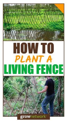 How and why you should plant a living fence on your homestead! | The Grow Network