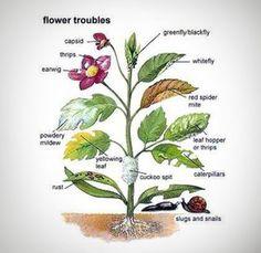 Flower Troubles