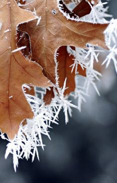 snow and ice, frost, 2 Winter Snow, Winter Time, Winter Leaves, A Touch Of Frost, Vive Le Vent, Ice Crystals, Foto Art, Snow And Ice, Winter Beauty