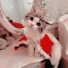 : These loveable cats will bring you joy. Cats are wonderful friends. Cute Little Kittens, Cute Baby Cats, Cute Little Animals, Cute Funny Animals, Kittens Cutest, Funny Cats, Pretty Cats, Beautiful Cats, Cute Cat Wallpaper