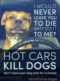 Please remember not to leave your precious pup in the hot car this summer!