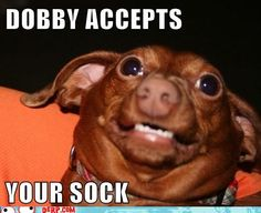 DOBBY ACCEPTS  YOUR SOCK