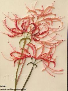 Lycoris radiata by Endz