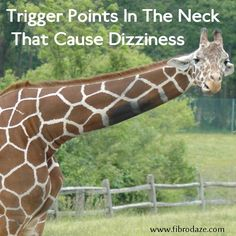 Trigger points in the neck can cause dizziness and vertigo that many people with fibromyalgia experience. These trigger points can distort your perception and sense of balance, causing you to drop things or stumble and bump into things. In this post I will explain: where these trigger points are, what symptoms they cause and how to self-treat them. #fibromyalgia #dizziness