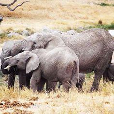 Elephants #Kilwa #Tanzania #kiyodeaitalia #onlus Follow us www.kiyodea.it