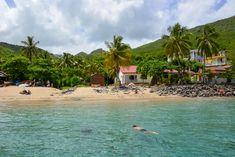 Martinique - nager avec des tortues vertes à l'anse Dufour