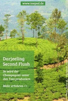 Darjeeling Schwarztees der zweiten Ernteperiode schmecken besonders lecker. Warum und was diese Ernte auszeichnet, lesen Sie bei uns im Blog.