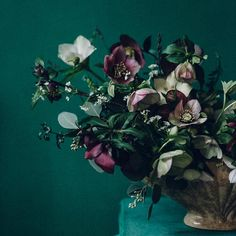 Winter Hellebores by Swallows & Damsons | Design*Sponge