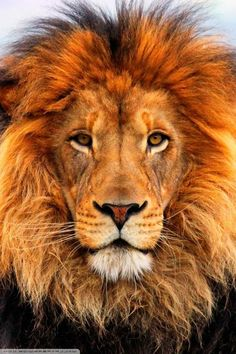 """The Lion Inside of Us (Warriors)- People of Great Courage & """"Inner Strength"""" to Face Our Inner Demons, & Ultimately Win & Not In Giving In to Our Urges/Desires & Illnesses!! We Feels as If Were the Top of the World - As if were in the movie Lion King. Never Let Your Inner Lion Inside of You Die, Only You then Have to Reawaken It!! Reawakening Is A lot Harder in Doing in My Experience, Than Finding Your Inner Lion!!"""