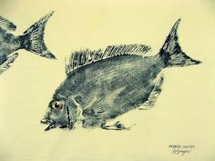 Porgy or Scup Fish rubbing GYOTAKU original on by fishfanatic, $45.00