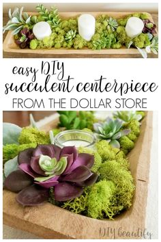DIY Succulent Centerpiece from the Dollar Store A stunning succulent centerpiece made from dollar store finds! Full tutorial at diy beautify! The post DIY Succulent Centerpiece from the Dollar Store appeared first on DIY Crafts. Succulent Wedding Centerpieces, Succulent Arrangements, Diy Centerpieces, Decorations, Dollar Tree Decor, Dollar Tree Crafts, Dollar Tree Flowers, Diy Dessert, Dollar Store Centerpiece