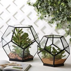 Octagonal Glass Box Set of 2 @LaylaGrayce