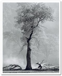 Ansel Easton Adams was an American photographer and environmentalist. His black-and-white landscape photographs of the American West, especially Yosemite National Park, have been widely reproduced on calendars, posters, and in books. Wikipedia