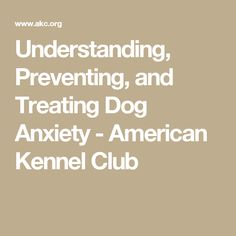 Understanding, Preventing, and Treating Dog Anxiety - American Kennel Club