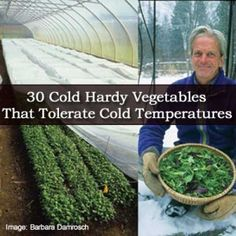 30 Cold Hardy Vegetables That Tolerate Cold Temperatures