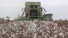 The 2014 cotton harvest is well underway around Georgia, and the Monitor's Mark Wildman visited one farm in Cook County that depends on every family member to pitch in to make sure the crop gets harvested correctly and on time.