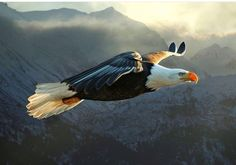 Oh Beautiful for Spacious Skies.. ~ American Bald Eagle On Patrol ~