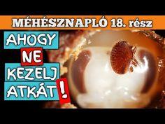 Méhésznapló #18 - Ahogy ne írts atkát - YouTube Cereal, Breakfast, Food, Youtube, Meal, Eten, Meals, Youtubers, Breakfast Cereal