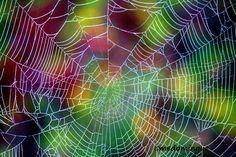 Spiderweb by M.E. Domingue