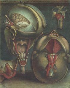 Two Views of the Head, Jacques-Fabien Gautier-Dagoty, 1746