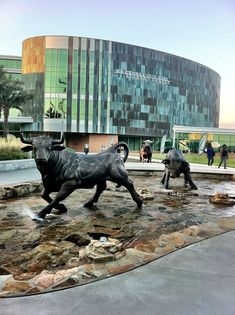 You Know You Go to USF When... | The Odyssey