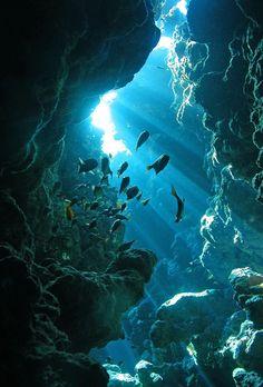 Under The Water, Under The Ocean, Underwater Caves, Underwater Life, Underwater Wallpaper, Underwater Animals, Underwater Pictures, Ocean Photos, Ocean Wallpaper