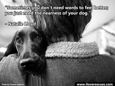 10 Heartwarming Quotes About Dogs That Will Melt Your Heart - #dogquotes #dogs #quotes http://www.iloverescues.com/10-heartwarming-quotes-about-dogs-that-will-melt-your-heart/