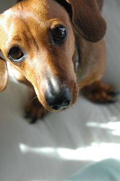 My beloved dog, Estrela (Star) - Submitted by bunnythroughthemirror
