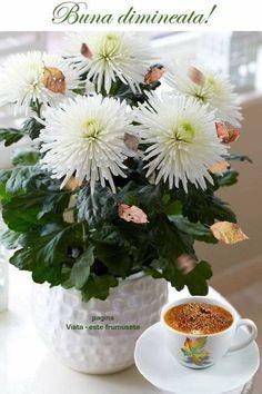 Acne Treatment, True Words, Plants, Folklore, Bom Dia, Plant, Shut Up Quotes, Quote