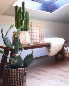 Boho Interior Bank Teak Holz Kaktus Bali Korb Boho, Interior, Cactus, Indoor, Bohemian, Interiors