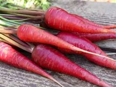 Home grown purple carrots...The use of compost in growing carrots is important for two reasons. Compost helps defend carrots from diseases that might injure the growing tip, another cause of forked roots. Garden carrots also need soil that is well endowed with potassium, which is naturally abundant in homemade compost. I also mix in a very light application of organic fertilizer when preparing to plant carrots, and then water the bed thoroughly.