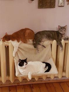 Cat Party, Dog Cat, Friends, Dogs, Animals, Gatos, Animais, Amigos, Animales