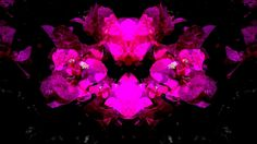 #Abstract #Floral #Bougainvillea #Poster Available as T-Shirts & Hoodies, Stickers, iPhone Cases, Samsung Galaxy Cases, Posters, Home Decors, Tote Bags, Pouches, Prints, Cards, Leggings, Pencil Skirts, Scarves, iPad Cases, Laptop Skins, Drawstring Bags, Laptop Sleeves, and Stationeries