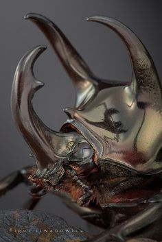 Amazing Alien Insects Up Close