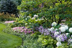 landscaping with hydrangeas and hostas - Google Search