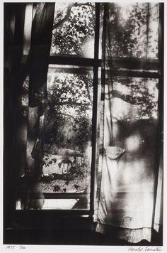 Harold Feinstein, Horse through Curtained Window, Putney, Vermont, 1975