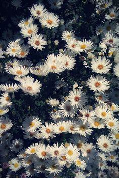 #flower #flowers #white #autumn #fall #warm