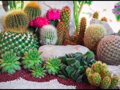 Cactus and Succulents make outstanding landscaping plants. They require little maintenance, grow in a variety of climates, and are easy to care for and grow. Most will even tolerate neglect. Indoor Cactus Garden, Small Cactus Plants, Colorful Succulents, Planting Succulents, Cactus Garden Ideas, Succulent Ideas, Cacti Garden, Succulent Gardening, Succulent Pots