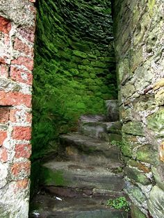 Tower wall staircase, Youghal, Co. Cork, Ireland I'm going to do a little self-promo here. I'm currently studying abroad in Ireland at UCC, and this is a picture from one of my day trips to a nearby. Moss Garden, Garden Paths, Take The Stairs, Stair Steps, Stairway To Heaven, Abandoned Places, Pathways, Stairways, Shades Of Green