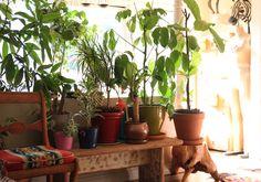 indoor plant row