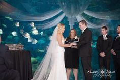 Florida Aquarium Wedding with a school of silvery look-down fishes.