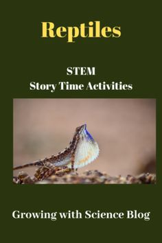 In another in our series of STEM story times, let's explore reptile-themed books, learning centers, and activities. The Books: To start story time, I began by reading an older picture book fr…